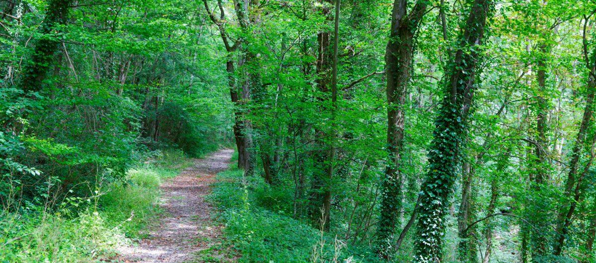 Waldweg an der Hornberger Mühle