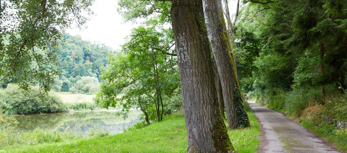 Zufahrt zur Hornberger Mühle und zur Praxis für Psychotherapie Ursula Kirti Grimm